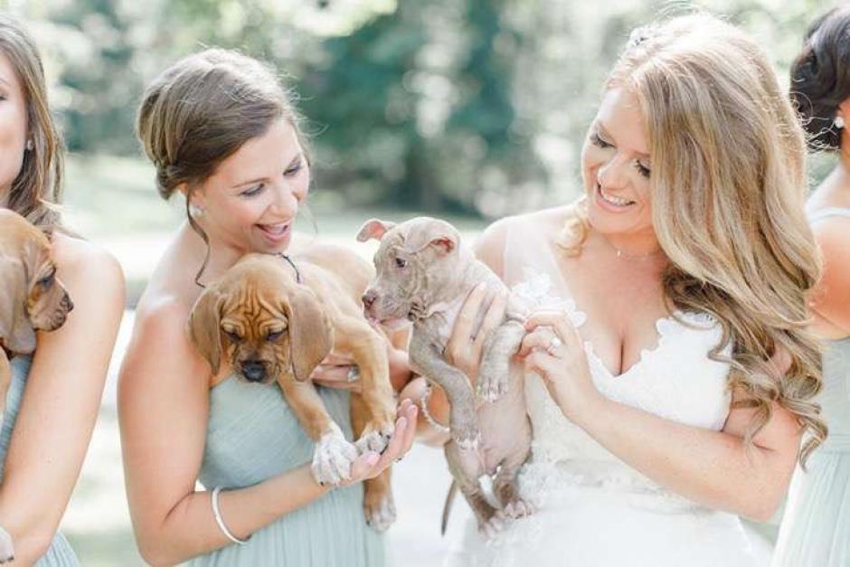 La novia decidió hacer un llamado para que la gente adopte perros y no los compre. (Foto: upsocl.com)