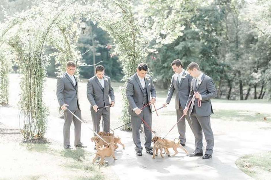 Los canes acompañaron a los caballeros durante la ceremonia. (Foto: upsocl.com)