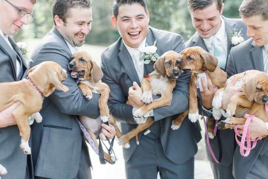 "Los perros pertenecen al refugio ""Pitties Love"". (Foto: upsocl.com)"