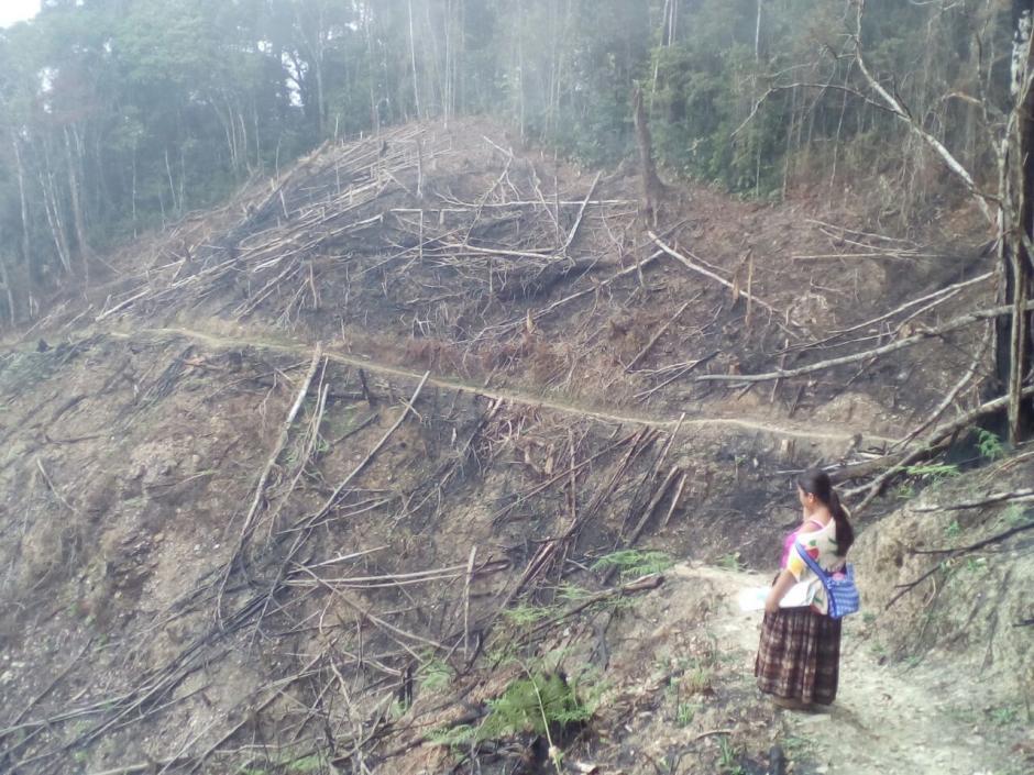 Los incendios arrasaron más de 8 mil hectáreas de bosque en Petén. (Foto: Conap)