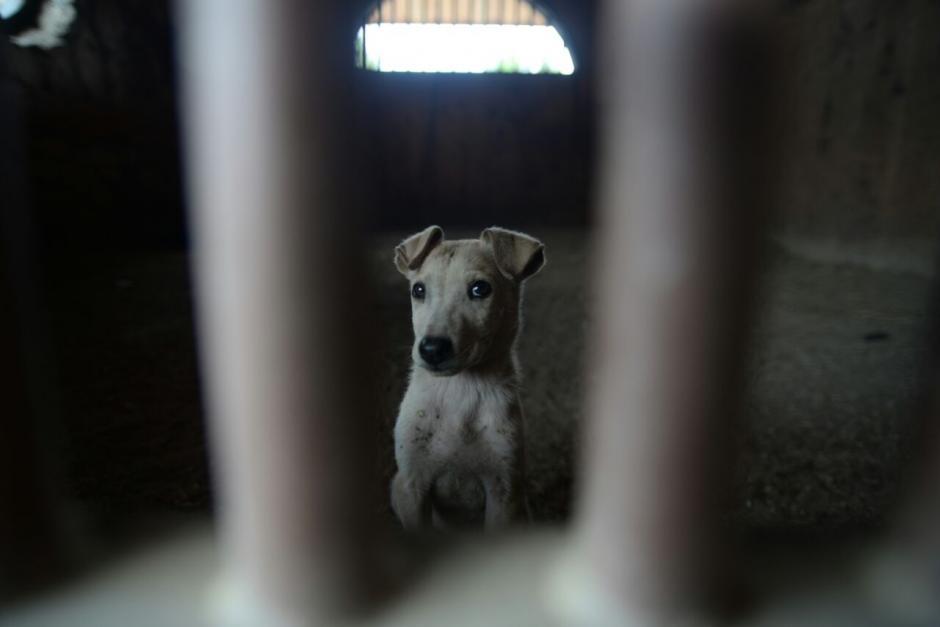 Otto, el perro, es el nuevo morador de la antigua finca de Otto Pérez Molina. (Foto: Wilder López/Soy502)