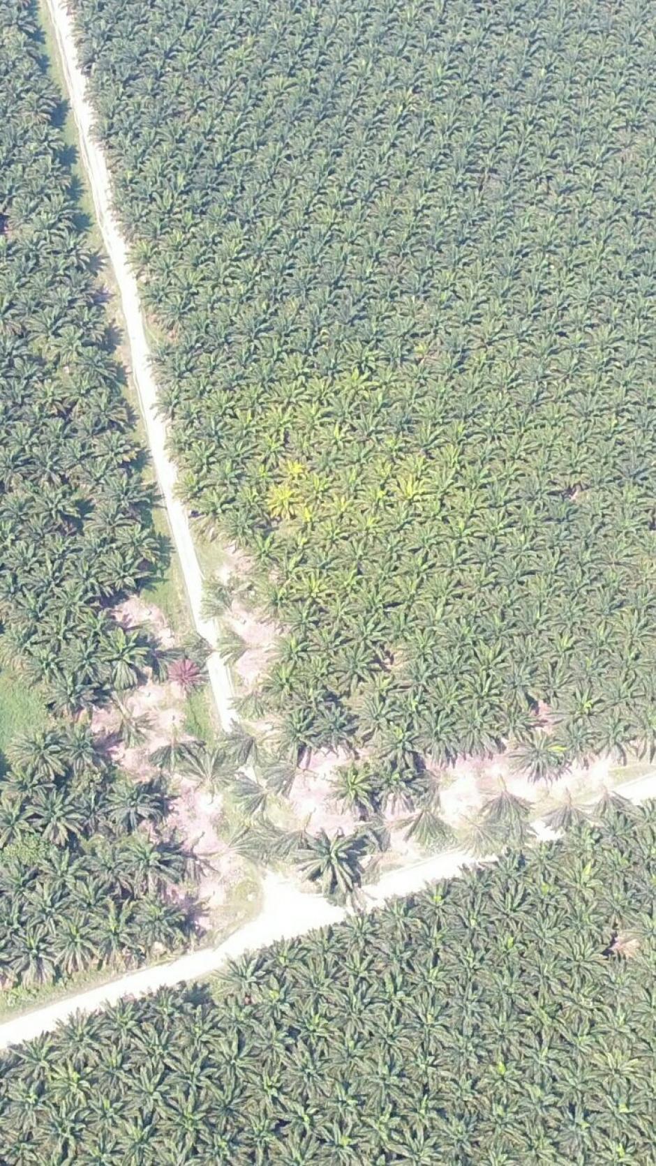 La empresa denuncia el derribo de parte de la plantación. (Foto: Naturaceites)