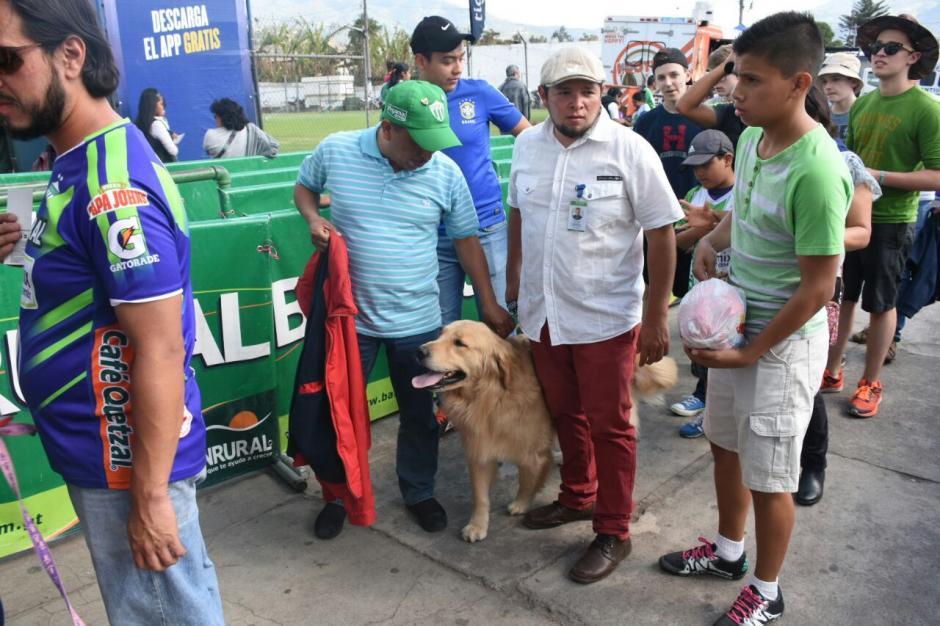 Los perritos se comportaron a la altura en los graderíos. (Foto: Pablo Solís/Nuestro Diario)