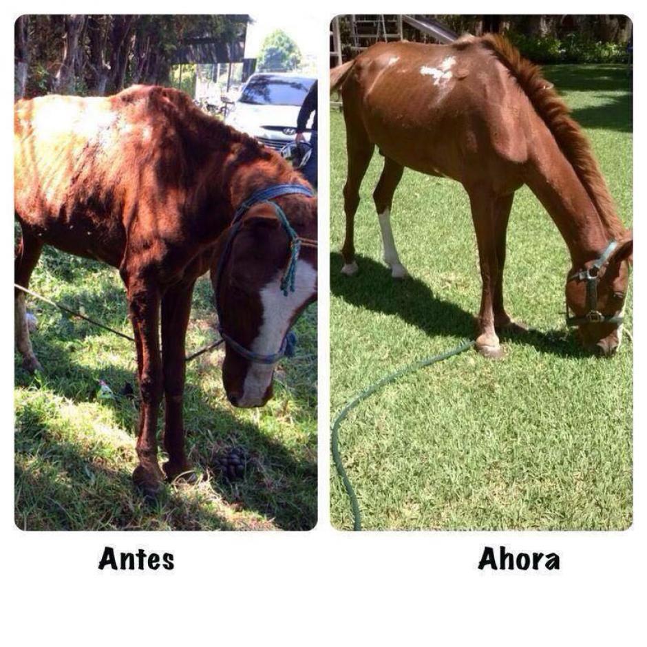 El cuadrúpedo estaba desamparado, pero la intervención logró cambiar su vida. (Foto: Municipalidad de Guatemala)