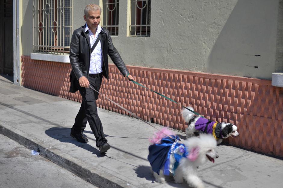 Uno de las mascotas porta un traje de cucurucho. (Foto: Wilder López/Soy502)