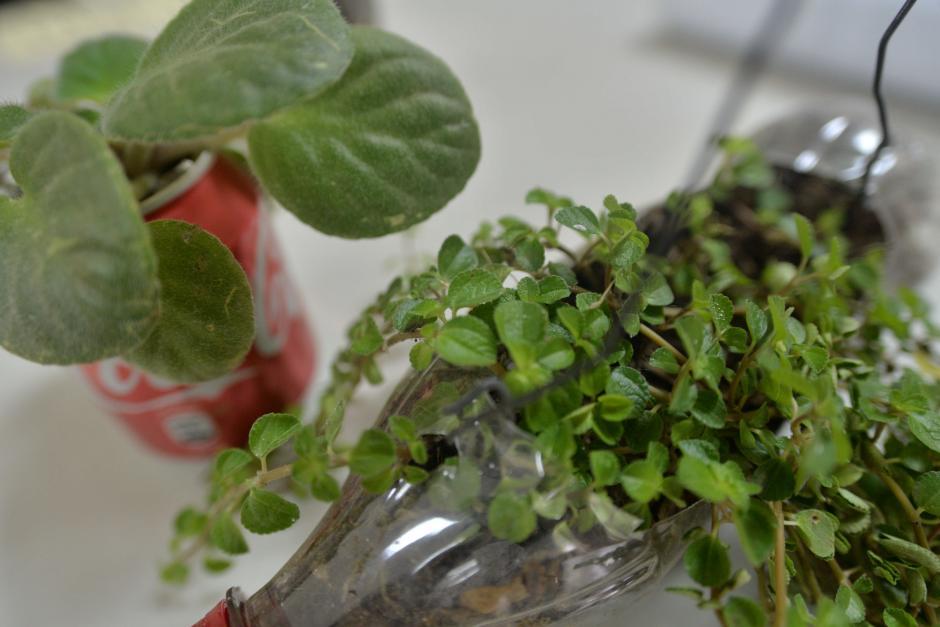 Por medio de la venta de plantas productoras de oxígeno jóvenes buscan el sostenimiento ambiental en su comunidad. (Foto: Wilder López/Soy502)