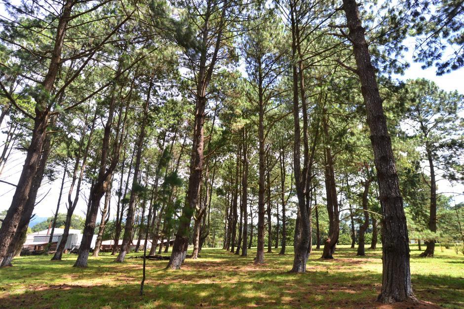 En esta área boscosa será construido uno de los bloques de viviendas. (Foto: Wilder López/Soy502)