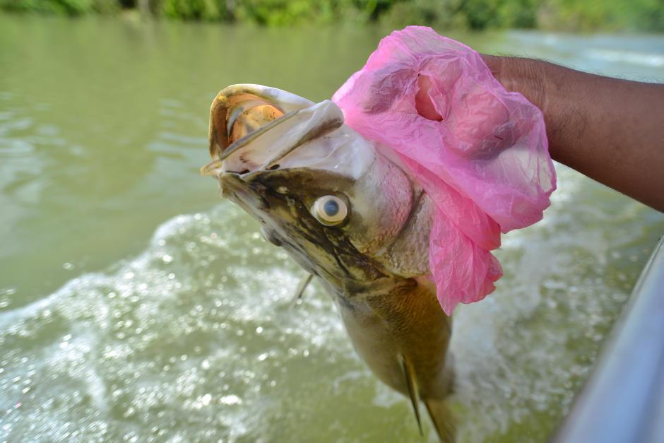 Uno de los comunitarios lleva en sus manos un pez muerto para mostrarlo en su comunidad y hacerles ver de primera mano lo que está pasando en el río La Pasión. (Foto: Wilder López/Soy502)