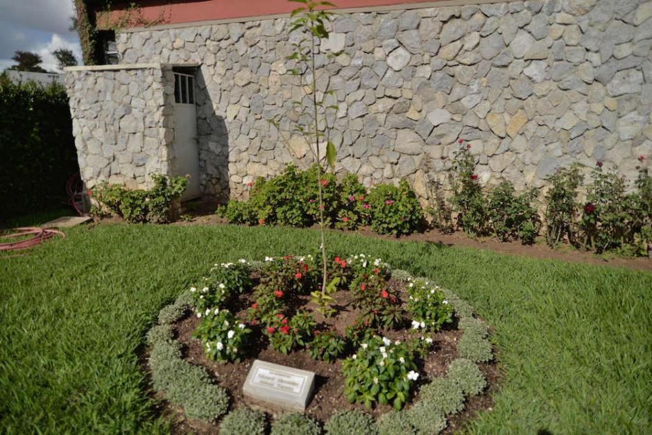 En este espacio los compañeros de Alex sembraron un árbol en su memoria. (Foto: Archivo/Soy502)