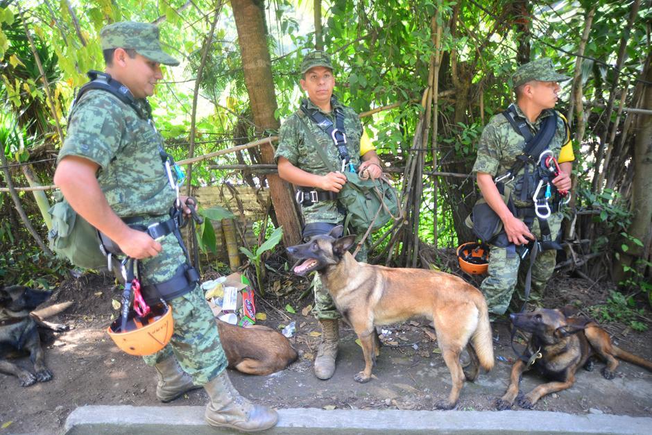 La brigada de rescate que llegó desde México incluye a 16 perros entrenados en la búsqueda de víctimas.(Foto: Alejandro Balan/Soy502)