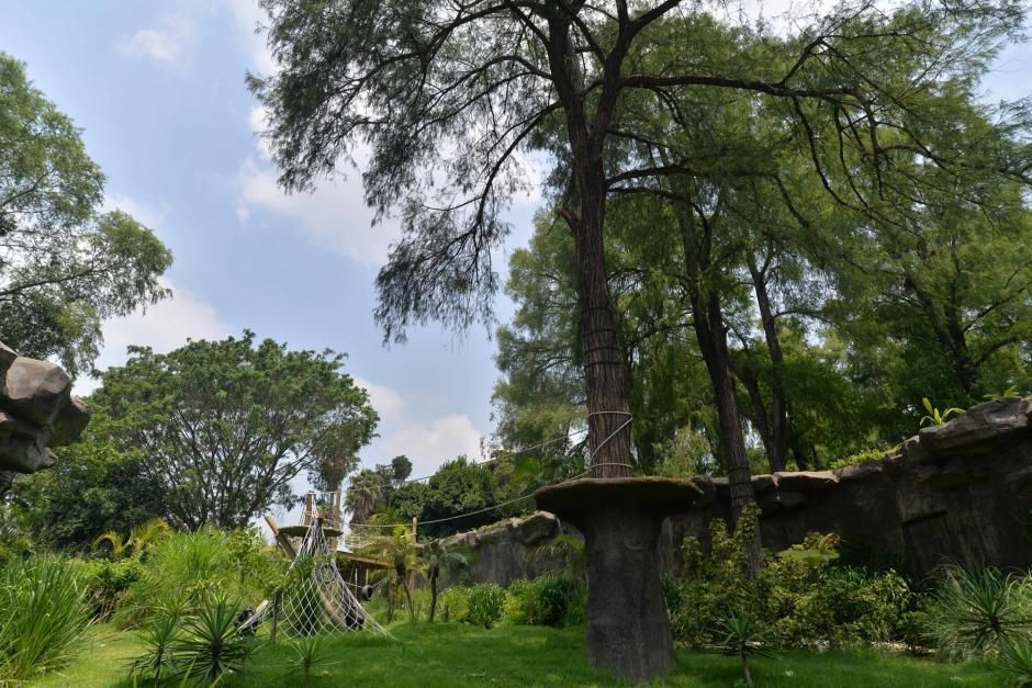 El recinto fue diseñado para reproducir su hábitat natural. (Foto: Wilder López/Soy502)