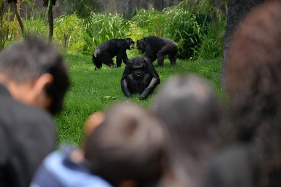 Este recinto es único en Guatemala y Centroamérica y esta especie no había sido exhibida en más de 20 años en nuestro país. (Foto: Wilder López/Soy502)