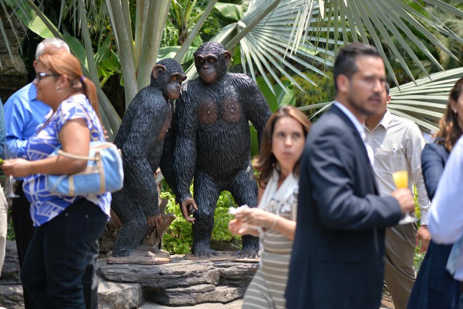 Esta especie se encuentra en peligro de extinción. (Foto: Wilder López/Soy502)