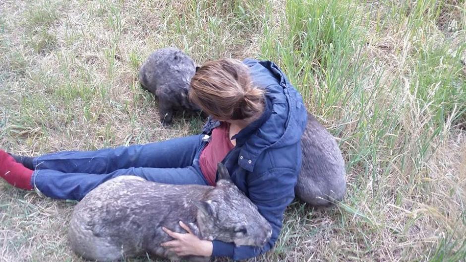 El wambat es un marcial pequeño y musculoso de patas cortas. (Foto: Facebook/WAO)