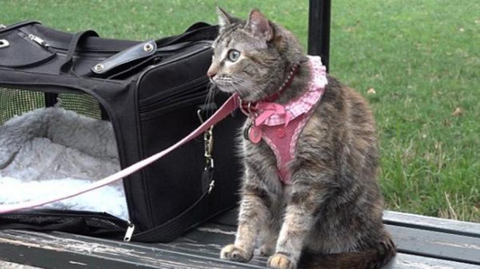El gato estaba dentro de una jaula y fue visto por una mujer que pensó que estaba sufriendo de calor. (Foto: Daily mail)