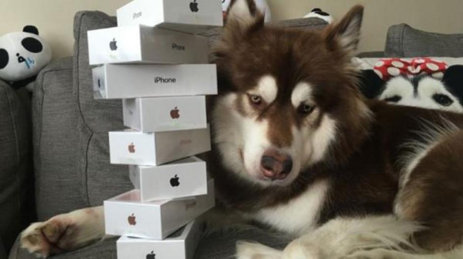 Coco es el perro que más aparatos tecnológicos tiene, ahora con ocho iPhone 7. (Foto: Infobae)