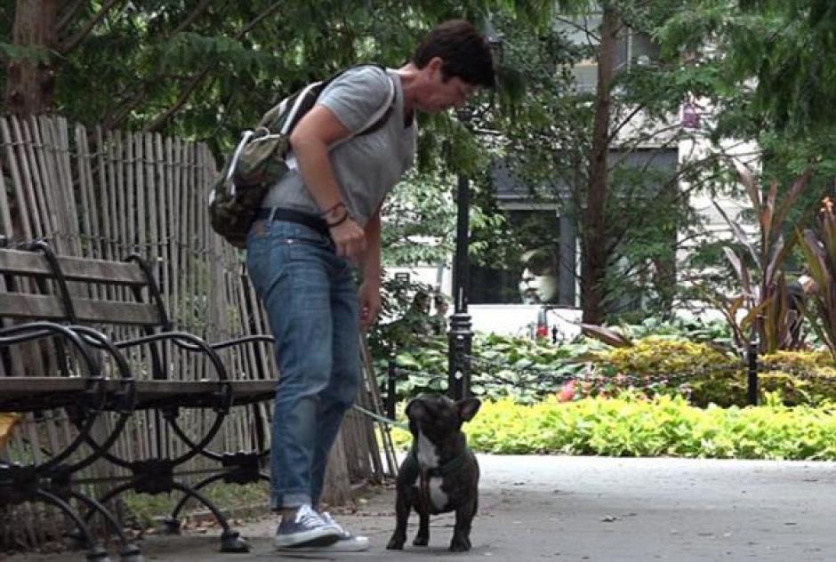 El perro encontró rápidamente a una persona que lo ayudó a buscar a su dueño.(Foto: Daily mail)