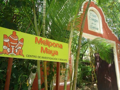 Guatemala y México firman convenio para rescate de abeja