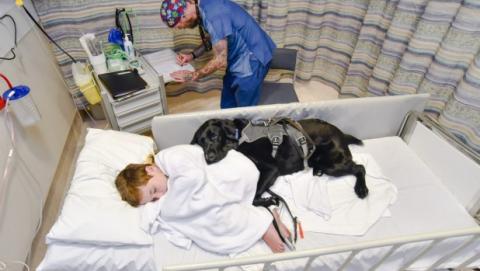 Mahe, el perro que siempre acompaña a su dueño autista hospitalizado