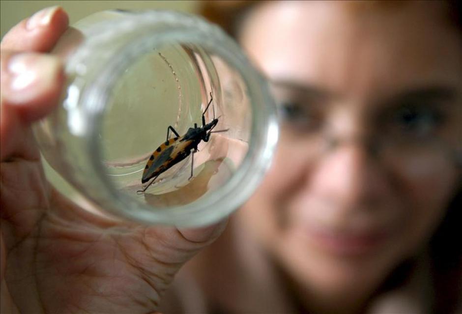 Desarrollan un robot volador inspirado en los insectos