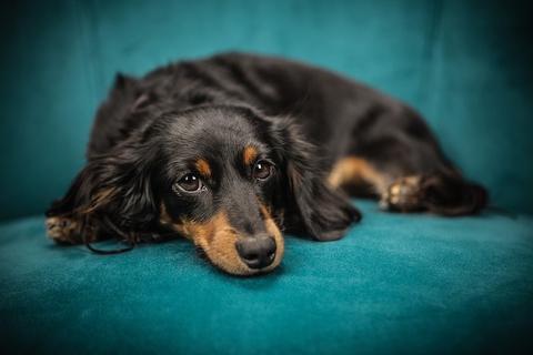 Científicos descubren por qué los perros son tan sociables