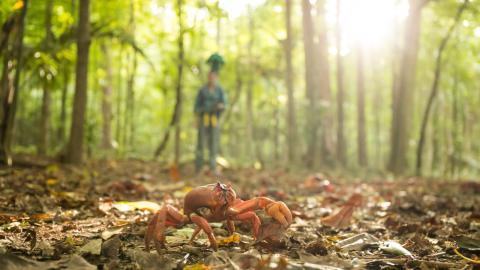 Google grabará una espectacular marcha de cangrejos en Australia