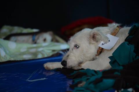 Dona una cobija para proteger del frío a los perritos rescatados