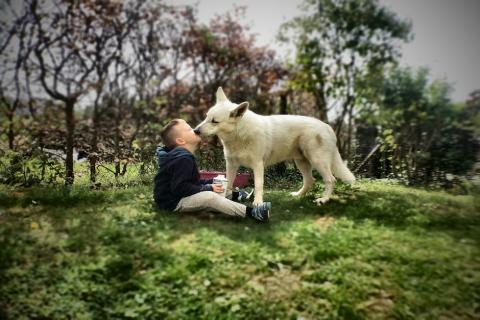 Por qué a tu perro le gusta lamerte la cara (y por qué debes evitarlo)