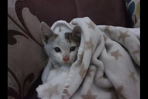 Rescatan a gato atrapado en viaducto de San Cristóbal y lo adoptan