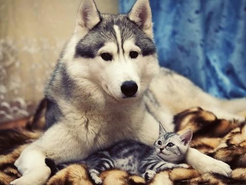 Revelan por qué los perros son mejores mascotas que los gatos