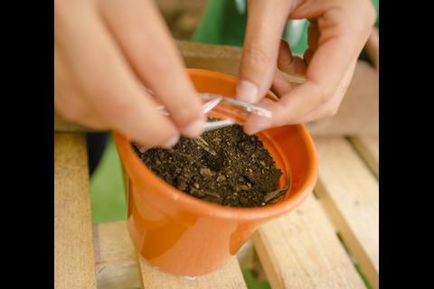 Planta un árbol y sé parte de #SemillaDigital