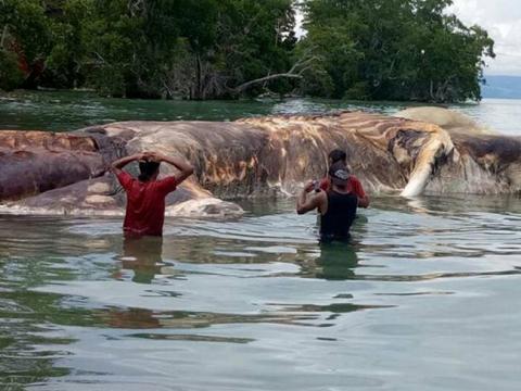 Hallan el cadáver de una enorme y misteriosa criatura marina