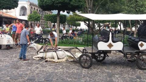 Caballo cae rendido luego de halar carreta en Antigua Guatemala