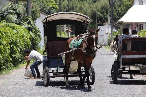 Un reglamento estancado perjudica a los caballos en la Antigua