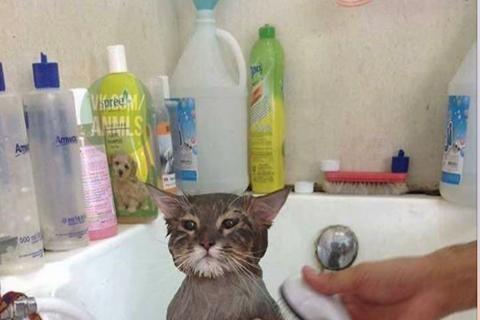 """Gato se hace viral al aceptar su """"inminente destino"""""""