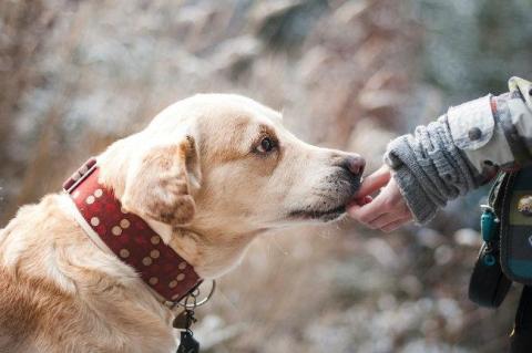 Por esta razón sentimos más empatía por un perro que por un humano
