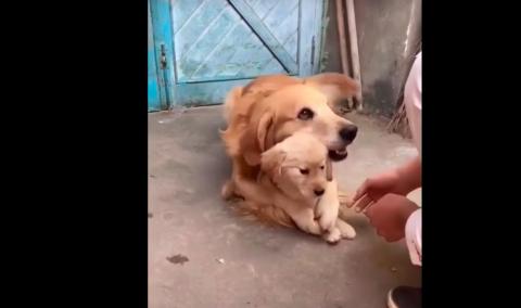 La adorable reacción de una perra para proteger a su cachorro