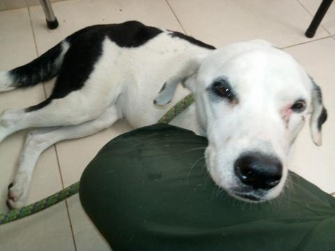 Fallece perrita que esperaba a su amo en aeropuerto de Colombia