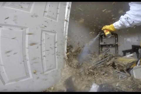 Video aterrador: encuentran un inmenso y peligroso nido de avispones