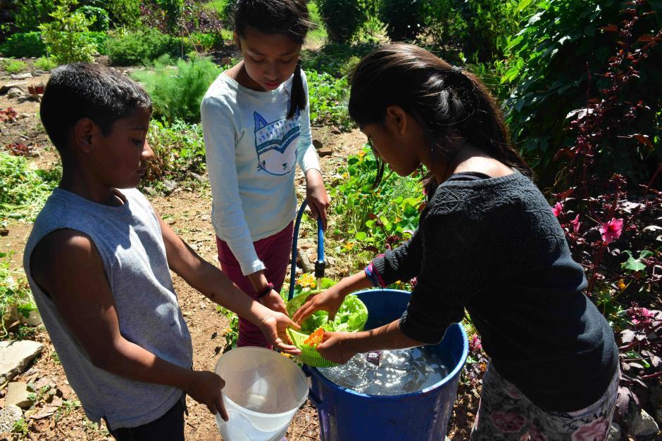 Conoce el huerto que alimenta la esperanza de los niños de Jocotenango