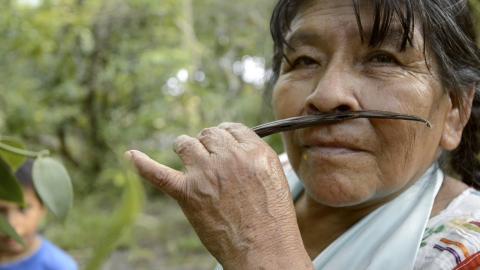 El crimen organizado de México se interesa por traficar vainilla