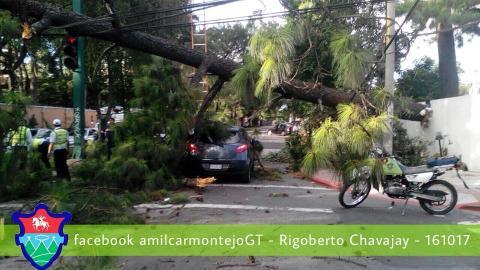 Árbol cae y complica tránsito en zona 9