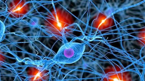 ¿El cerebro adulto es capaz de reproducir neuronas?