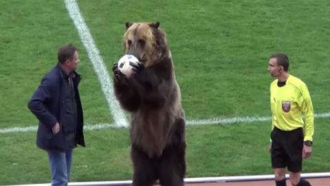 Rusia: oso entrega la pelota a un árbitro antes de un partido