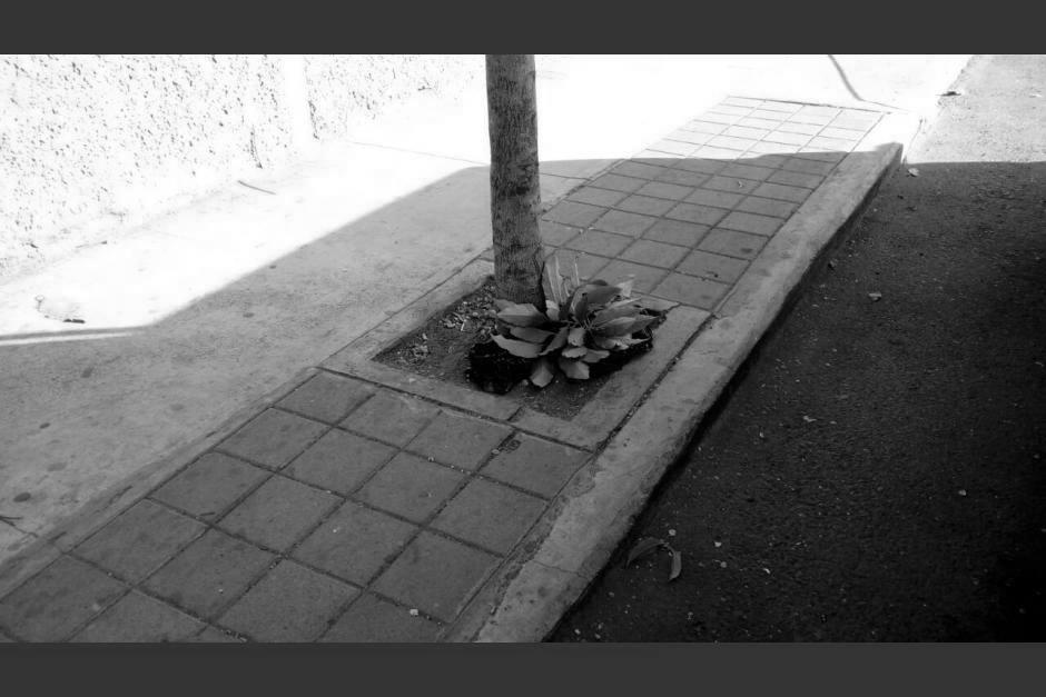 Por segundo día, abandonan restos humanos en la ciudad