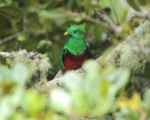 La metáfora del quetzal muerto
