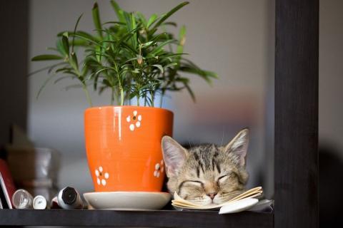 El aparato de uso común que representa un serio peligro para los gatos