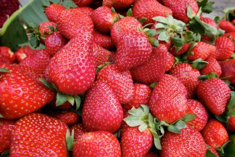 Frío afecta cultivos de fresas y papas en Occidente del país