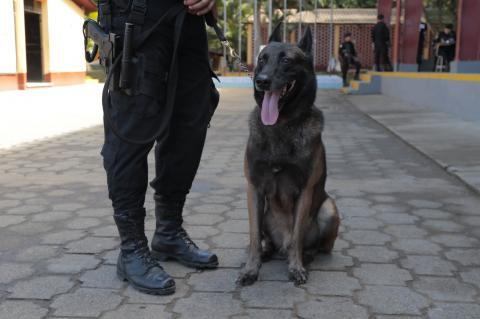 Así entrenan a los agentes caninos de la Policía Nacional Civil