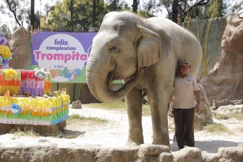 Celebra el cumpleaños de Trompita este fin de semana